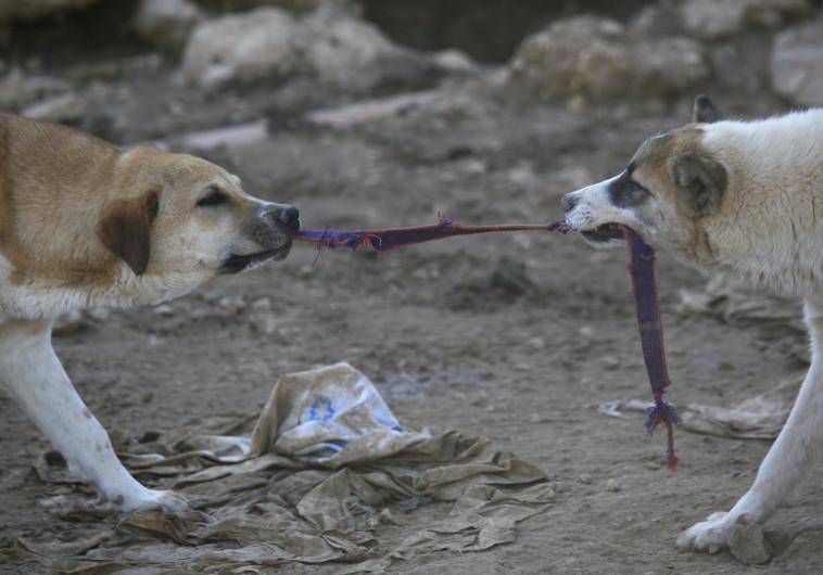 כלבים משוטטים