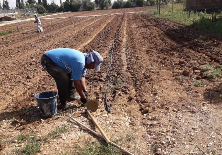 עובדים בכפר החקלאי