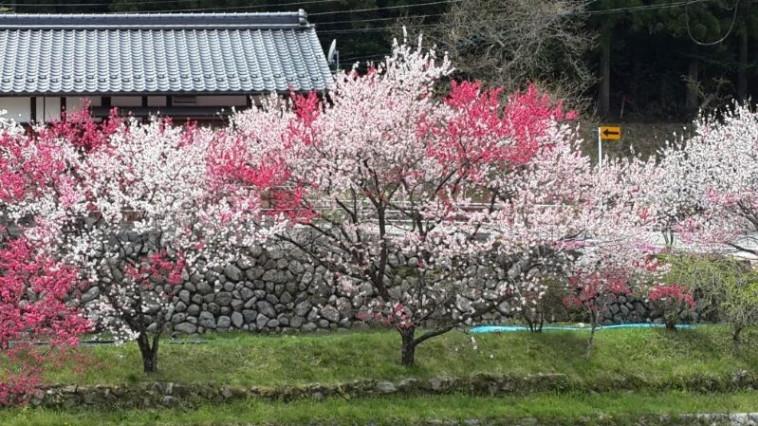 גן האמנות בהירושימה