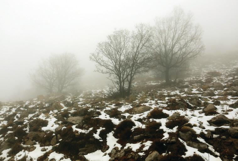 שלג בצפון. צילום: אריאל בשור