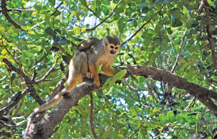 פארק הקופים. צילום: מיטל שרעבי