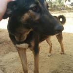 מישהי לרוץ איתה: הכלבה אפריקה