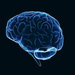 מוח, צילום אילוסטרציה