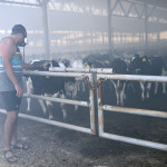 פרות בנחל עוז