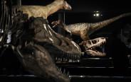 שלדים של דינוזאורים
