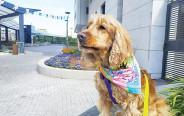 הכלב גוגל בן ה-10 מתל אביב