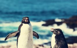 פינגווינים - ארכיון