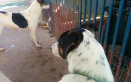 הכלבים אנטארקטיקה ואוסטרליה