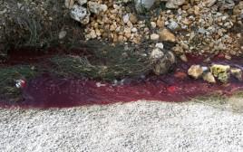 דם וביוב זורמים בוואדי קלט
