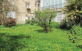 חצר הבית של נתן זהבי
