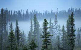 יער בצפון קנדה