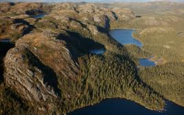 יערות בצפון קנדה