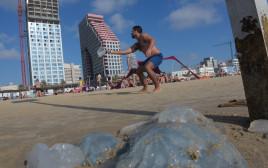 מדוזות בחוף תל אביב