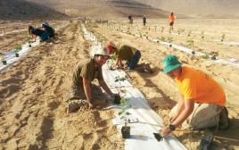 מתנדבים בחוות ננה