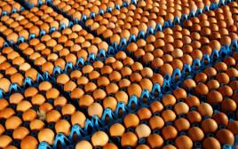 ביצים בבלגיה