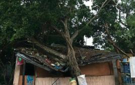 העץ שקרס בחצר משפחת כהן