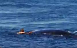השחיין מתגרה בלווייתן