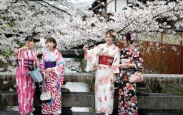 פריחת הדובדבן בקיוטו