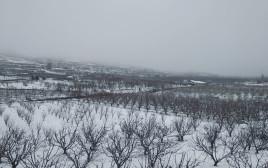 שלג בצפון רמת הגולן