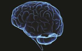 מוח - אילוסטרציה