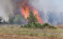 """השריפה ליד גבעת כ""""ח"""
