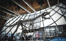 דגם של הדינוזאור שנמצא ב-2013