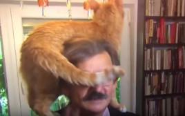 החתול מטפס על בעליו