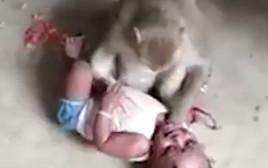 קוף ניסה לחטוף תינוק