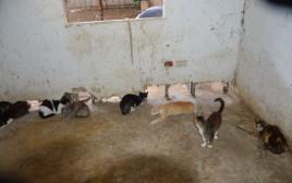 המתת כלבים וחתולים