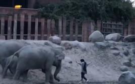 פלש לכלוב פילים בגן החיות