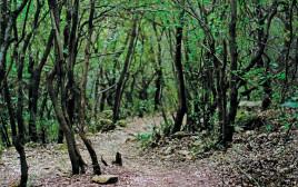שמורת הטבע של הר מירון