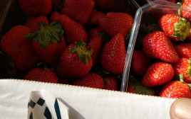 תותים מרצועת עזה