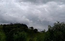 גשם העכבישים של ברזיל