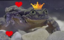רומיאו הצפרדע הבודד בעולם מצא אהבה