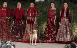 כלב פלש לתצוגת אופנה, גנב את ההצגה