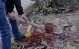 צולם חופר קבר לאחותו