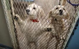 כלבים שעברו התעללות