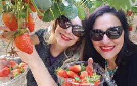 מי רוצה תותים?