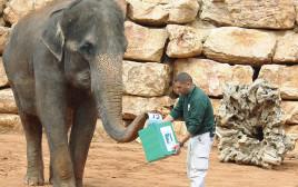 בחירות בגן החיות
