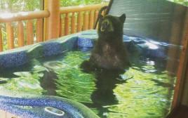 שלושה אחים דובים ביום כיף בג'קוזי