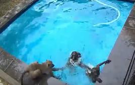 הפתעה בבריכה