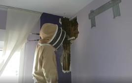 גילו נחיל דבורים בחדר השינה
