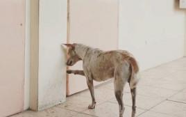 כולו לב: כלב ממתין כל יום לחברו שמת