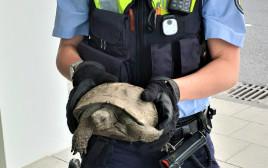 משטרת קלן