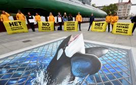 הפגנה למען שחרור הלוויתנים