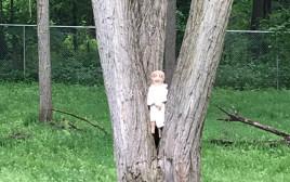 הבובה הקריפית שמפחידה את הגולשים