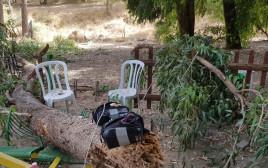 זירת קריסת העץ