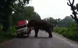 פיל בהודו דוחף רכב
