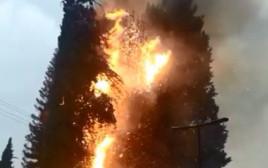 עץ שנפגע מברק בכפר תבור