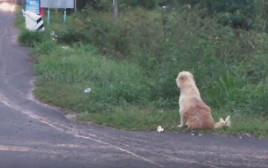 כלב מחכה לבעליו